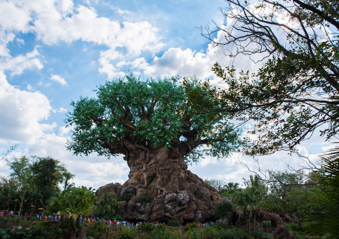 animal kingdom disneyworld