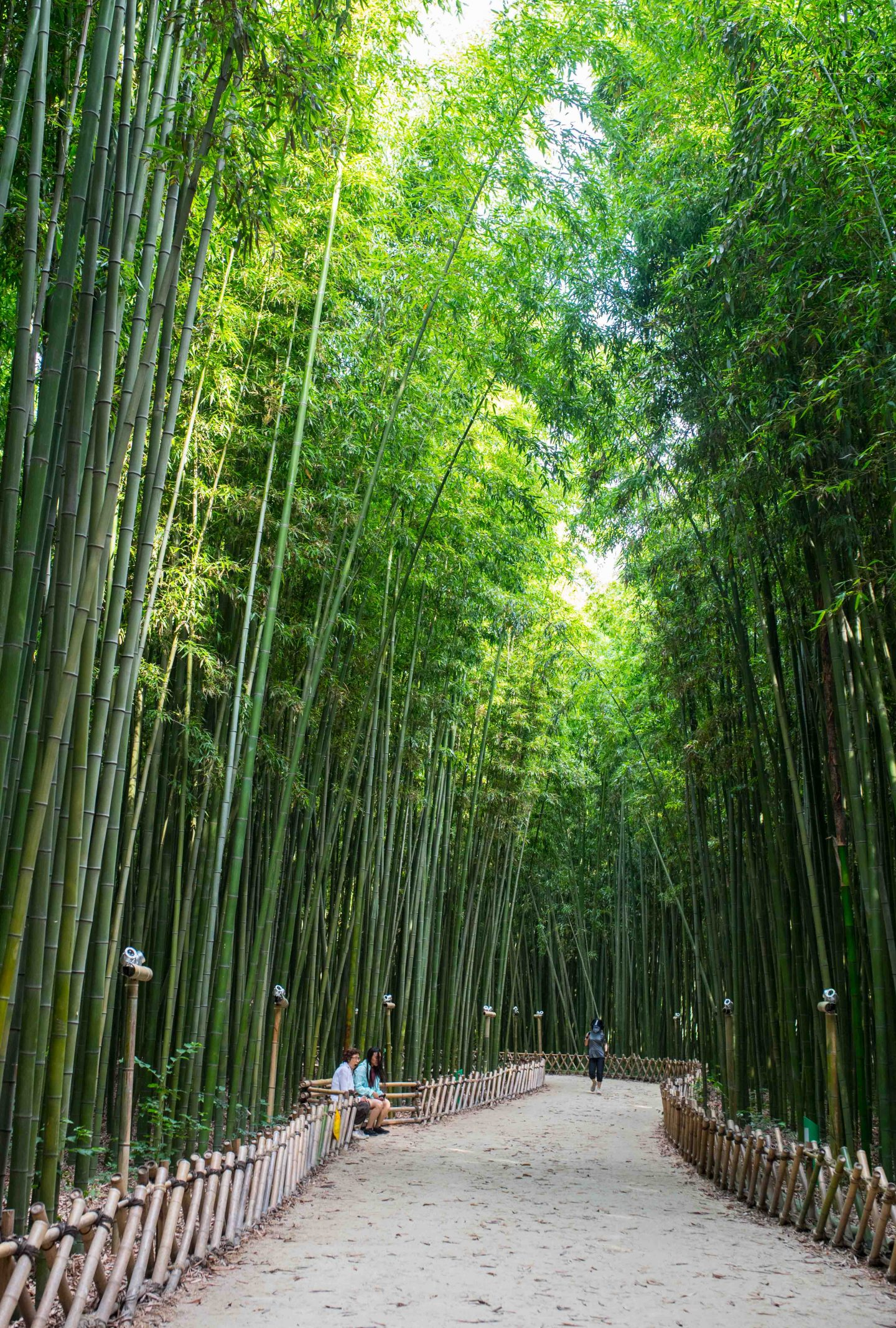 Taehwa River Bamboo Forest