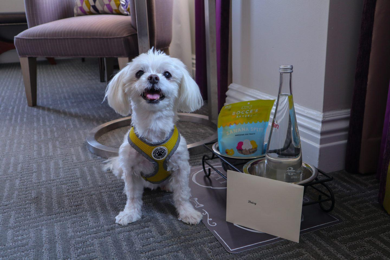 dc dog friendly hotel
