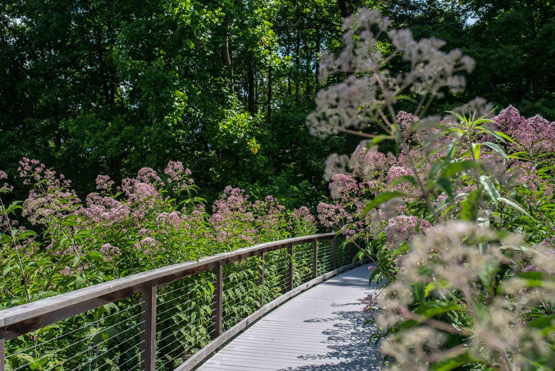 pink flowers Longwood Gardens