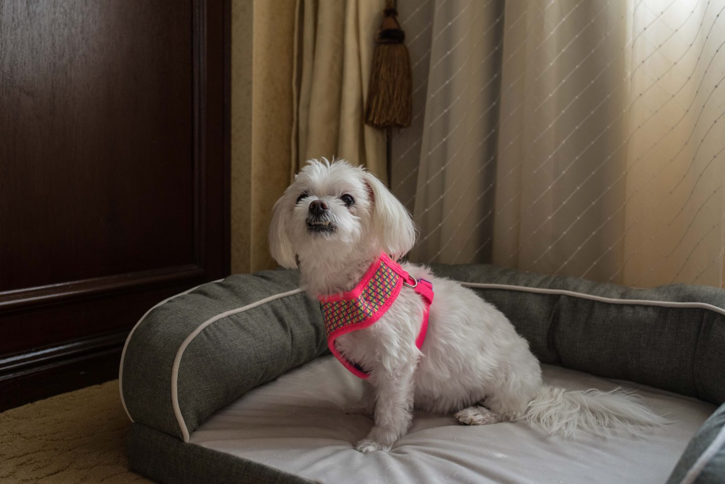 dog friendly hotels delaware