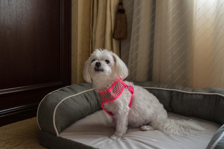dog friendly hotels delaware