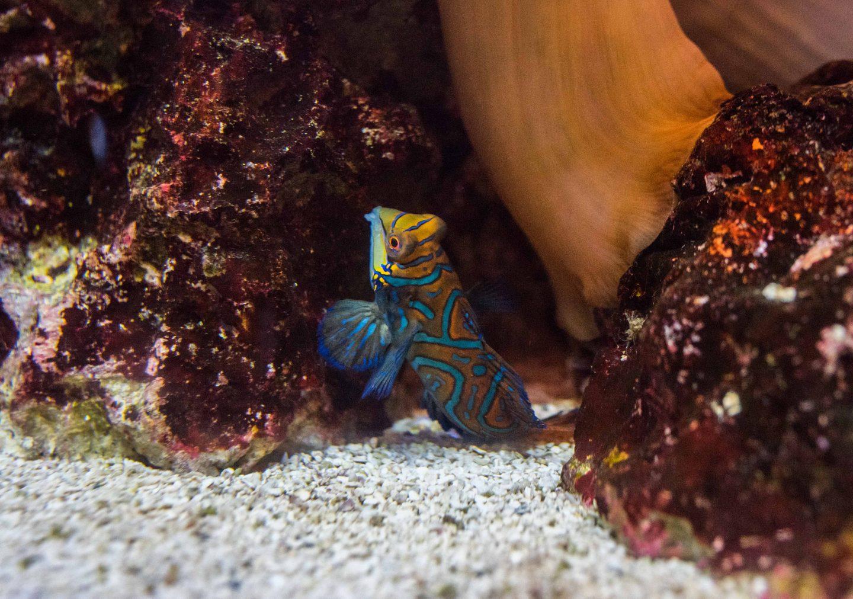 georgia aquarium exhibit