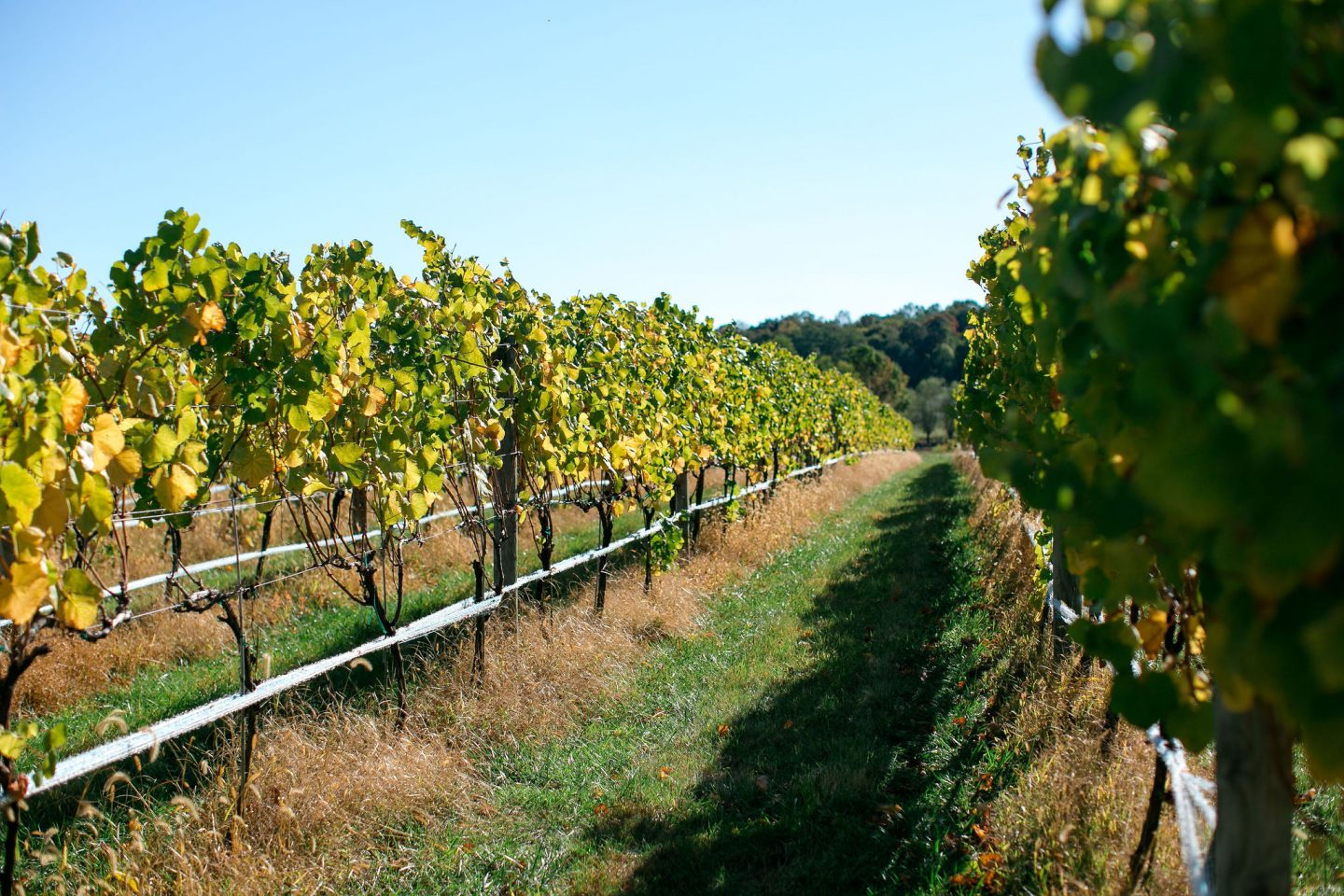 walsh family vineyards