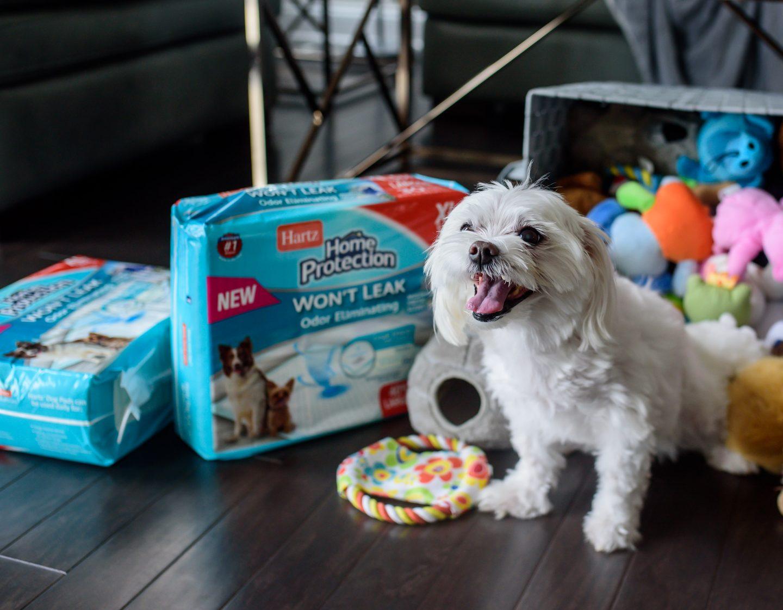 dog potty pads
