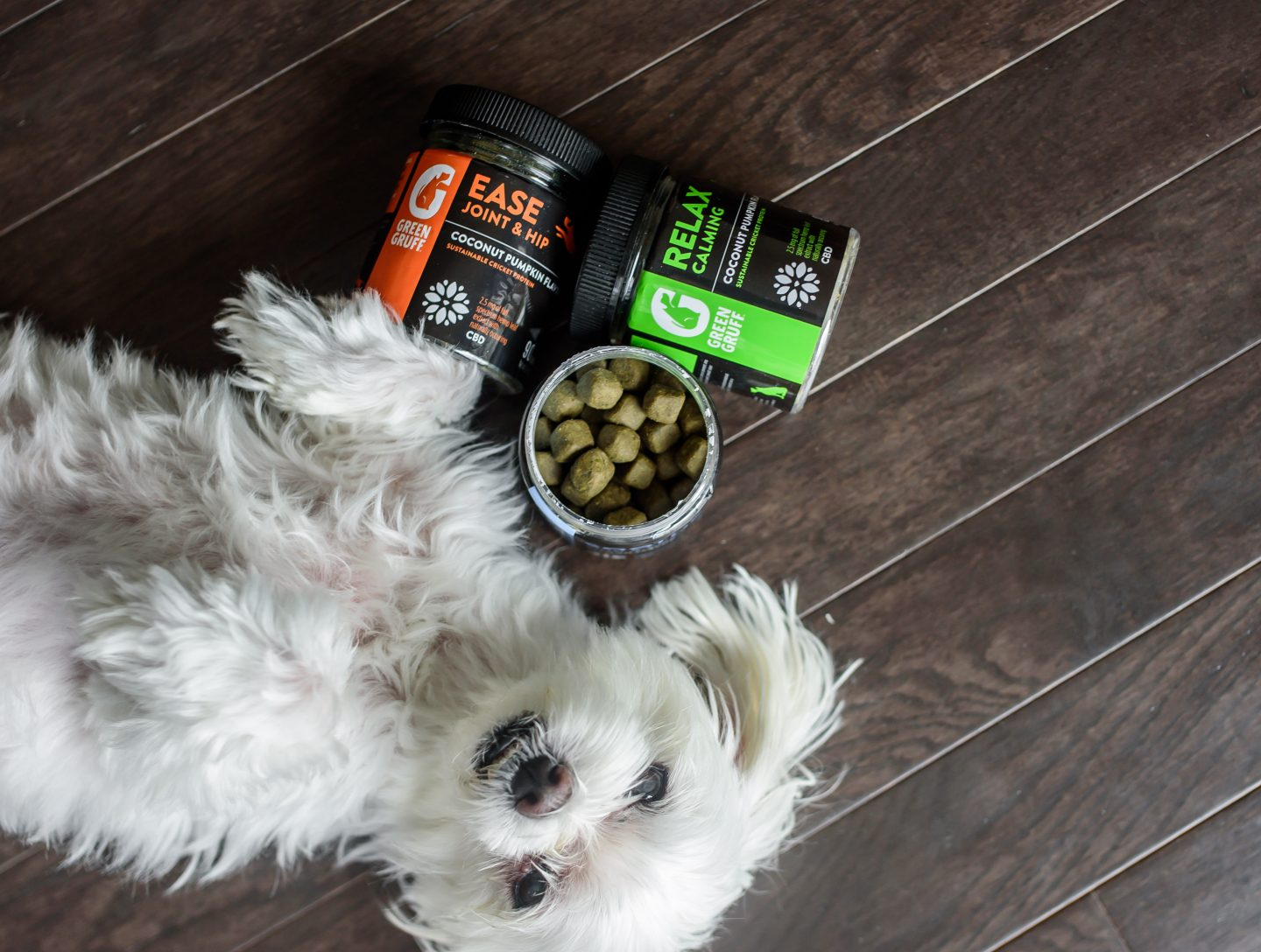 cbd for dogs