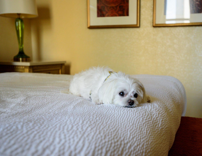 delaware dog friendly hotels